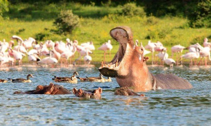 4-Day Lake Naivasha-Lake Nakuru/Maasai Mara Game Reserve