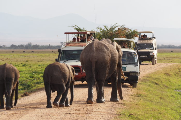 Amboseli and Tsavo Holiday Self Drive Deals