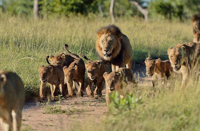 3-Day Taita Hills Safari