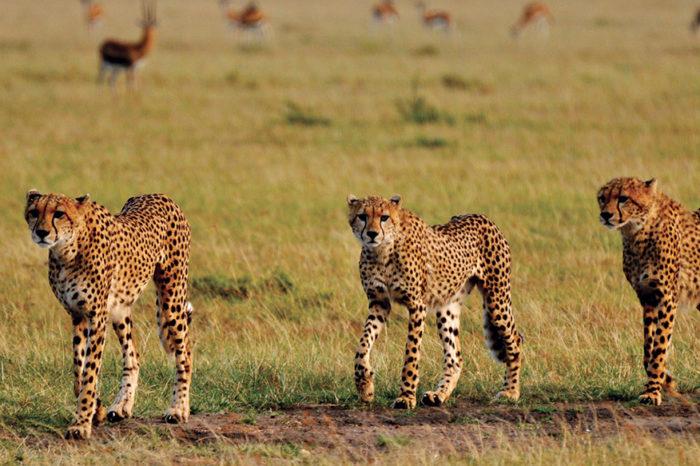 4-Day Fantastic Kenya Safari