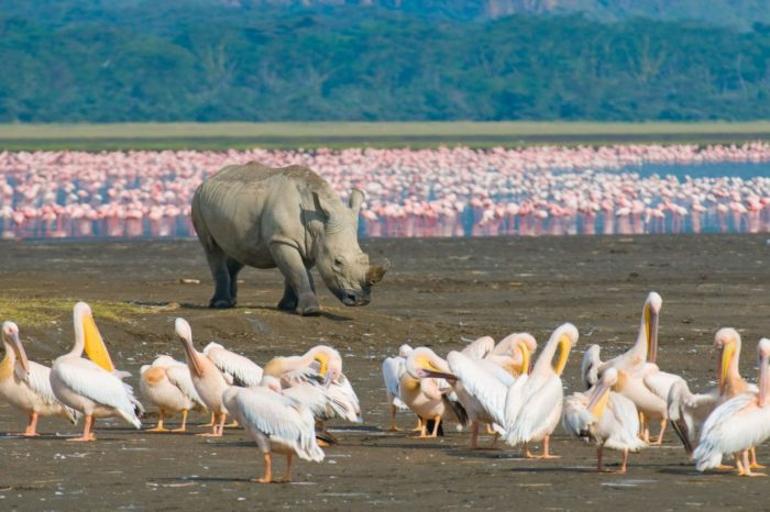 Lake Nakuru & Elementaita Self Drive Deals